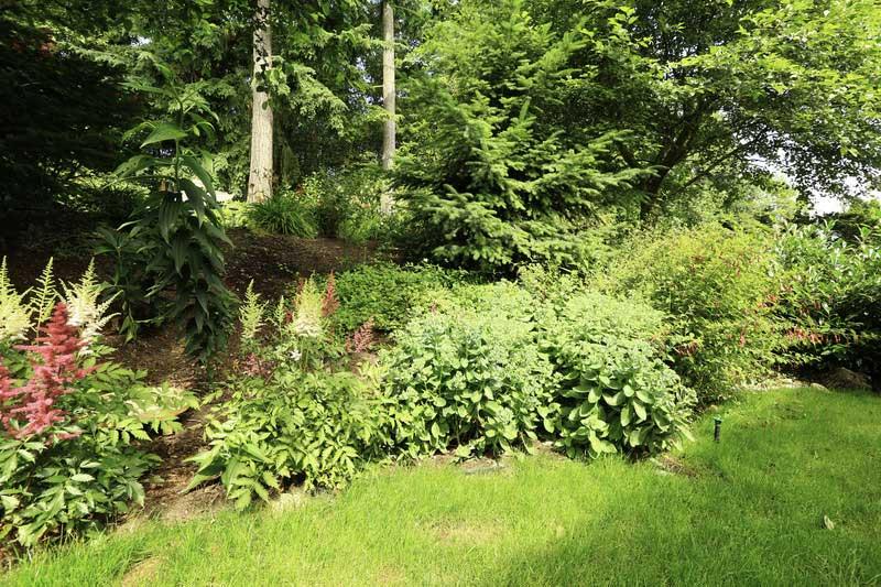 Kupujete dům se zahradou? Jak naložit se vzrostlou zelení.