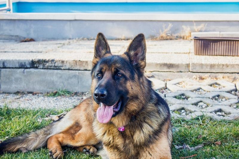 Hlídací pes je věrný přítel, který vás upozorní na přítomnost cizího člověka