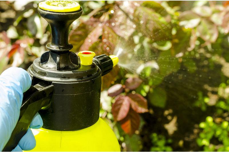 Proč nepoužívat Roundup ani jiné herbicidy a pesticidy na zahradě